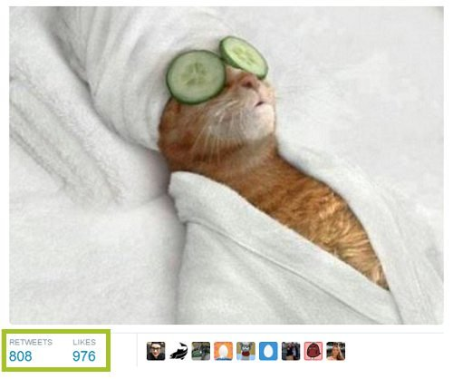 screenshot of funny cat tweet